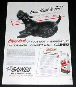 1945 Old WWII Magazine Print Ad Gaines Dog Food Black Terrier