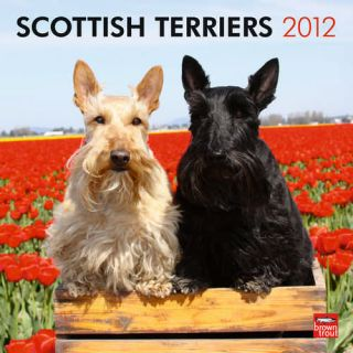 Scottish Terriers 2012 Wall Calendar