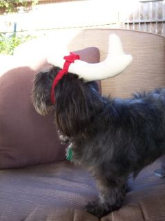 The Grinch Max Antler Dog Pet Christmas Costume