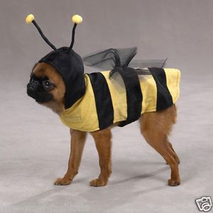 Honey Bumble Bee Dog Puppy Cat Pets Pet Fun Halloween Costume Costumes