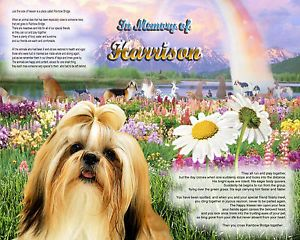 Shih Tzu Dog Memorial w Name Rainbow Bridge Poem Personal Unique Pet Loss Gift