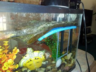 New Zoo Med Turtle Dock for 15 Gallon Tanks Medium
